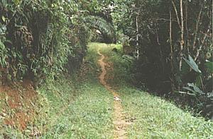 A trilha que dá acesso à praia das Conchas